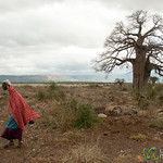 Masai Woman and Baobab Tree - Lake Manyara, Tanzania