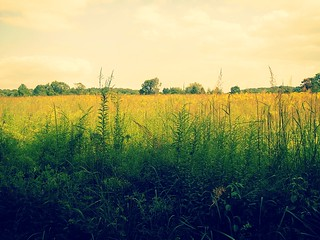 Fields of Gold, Willowwood! 3