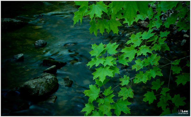 家附近的河边拍拍 · DA*60-250