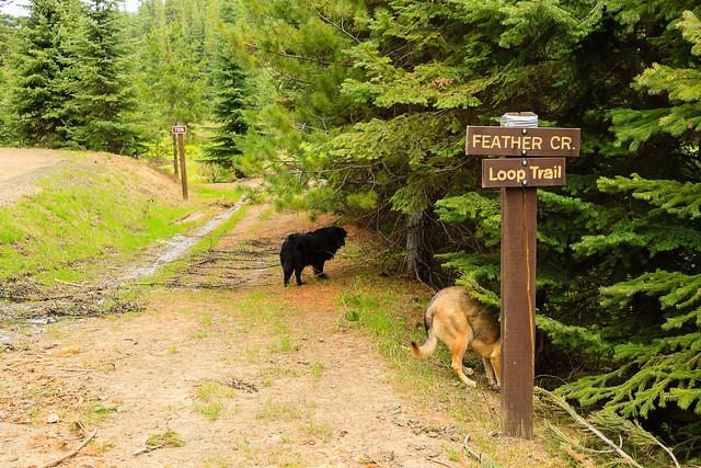 Feather Creek Trailhead