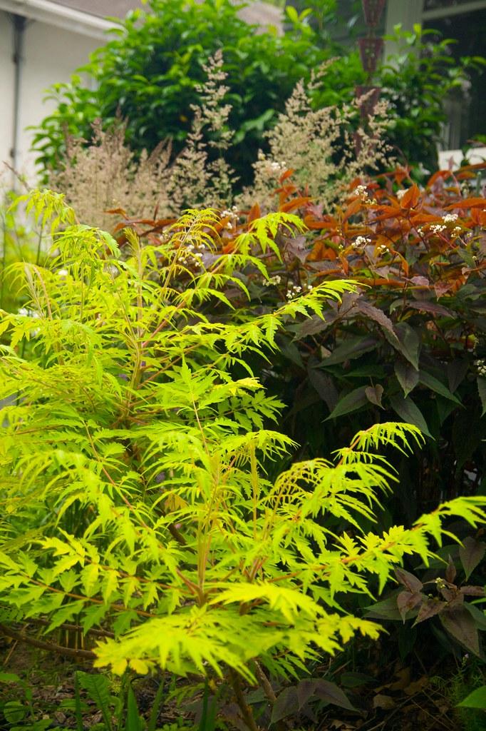 sumac persicaria calamagrostis  1750