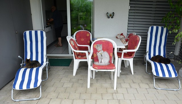 Tabby, Fluffy and Nera taking a rest