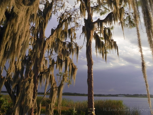 trees nature landscape nikon florida spanishmoss sfcc p100 hevanmiller lackglenada