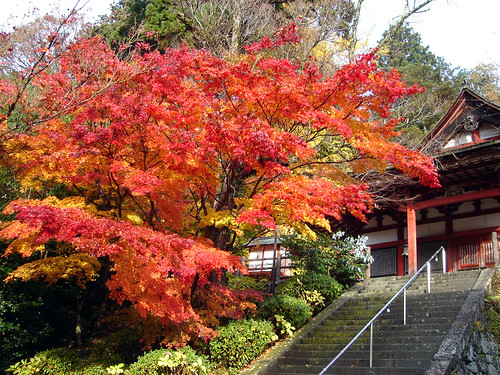 Autumn leaves at Tan-zan shrine in Nara Japan.