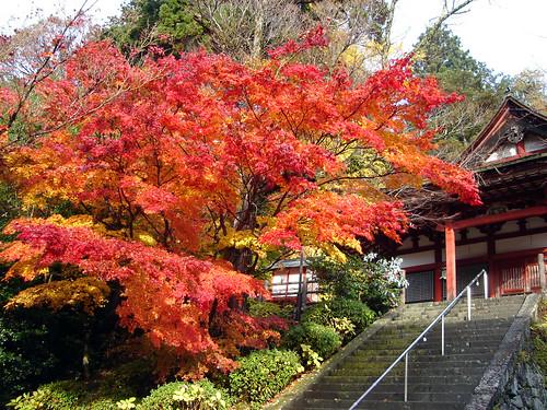 Autumn leaves at Tan-zan shrine in Nara Japan.