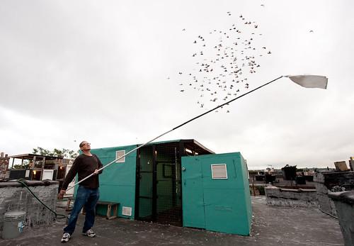 Luis signaling his flock: Bushwick Brooklyn