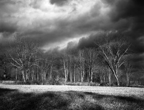 trees sky 120 weather clouds landscape rangefinder williamspark kodaktmax100 brookfieldct fujigs645pro