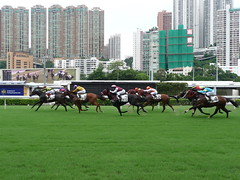 Witness a wonderful game and win some bucks too at Happy Valley Racecourse - Things to do in Hong Kong