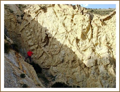 Bueña (Teruel). Yacimiento de Megaplanolites Ibericus