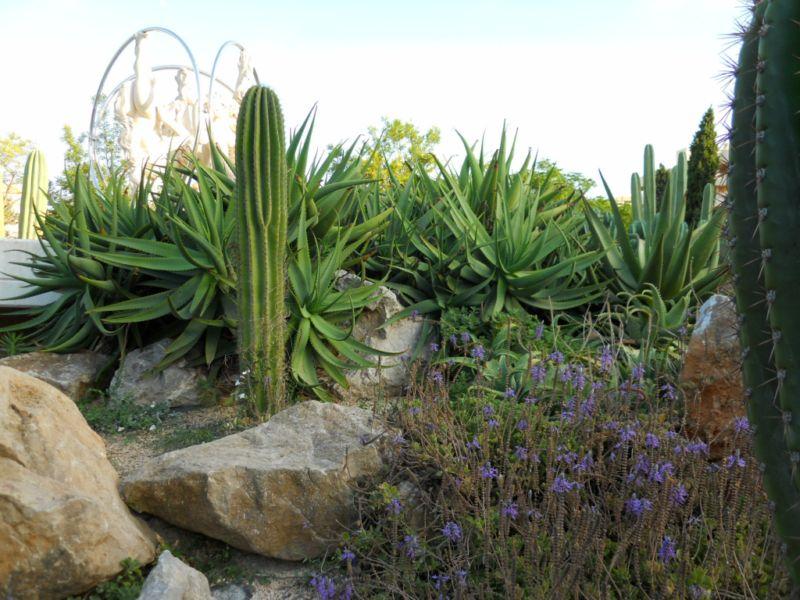 Jardines para zonas con sequ�a - Xerojardiner�a