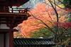 Photo:Tinted Autumnal Leaves / 紅葉(もみじ) By TANAKA Juuyoh (田中十洋)
