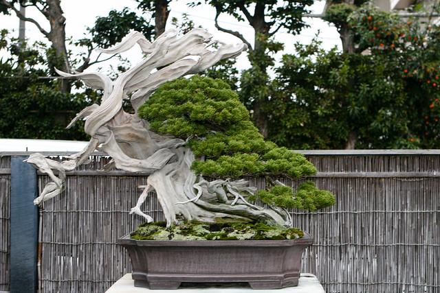 Backyard Bonsai Garden : 5217164527f7a2a4c4a9zjpg