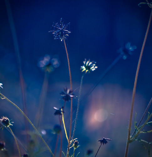 morning blue sky mountains newmexico closeup sunrise star colorful web spiderweb seeds cobweb grasses sunlit wormseyeview midnightblue colbalt gilamountains nikond90