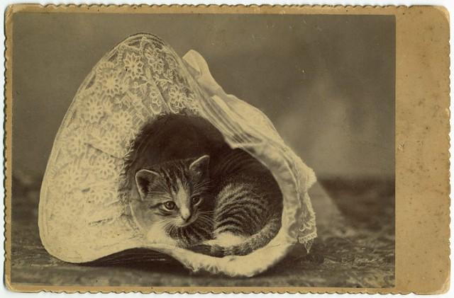 Kitten nestled in a bonnet