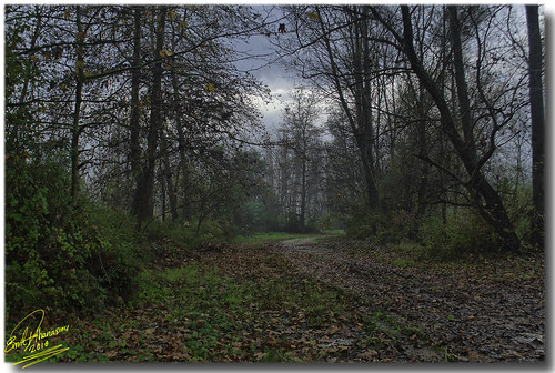 fall geotagged hellas greece drama hdr autumnscene forestroad d90 kefalari nikond90 concordians natureselegantshots 7xphdr fairytaleatmosphere theoriginalgoldseal mygearandmepremium mygearandmebronze ringexcellence musictomyeyeslevel1 flickrstruereflection1 geo:lat=41064003438307246 geo:lon=24263374430549675