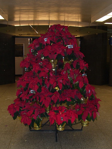 "Poinsettia ""Tree"", Toronto Union Station Departures Concourse_1493"