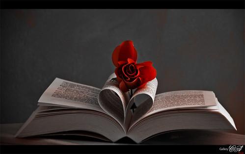 france fleur rose automne canon rouge flickr heart noiretblanc hiver coeur fave desaturation 365 provence arbre livre plumes feuille flore projet vaucluse branche 1day faune carpentras 18200mm 1shot project365 eos50d partiel flickraward 1picture