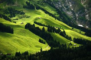 Waldundwiesenlandschaft