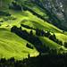 Waldundwiesenlandschaft by Markus Moning