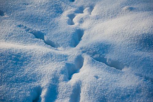Deep fox footprints