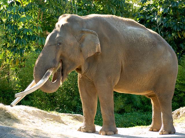seks-samtsov-slonov