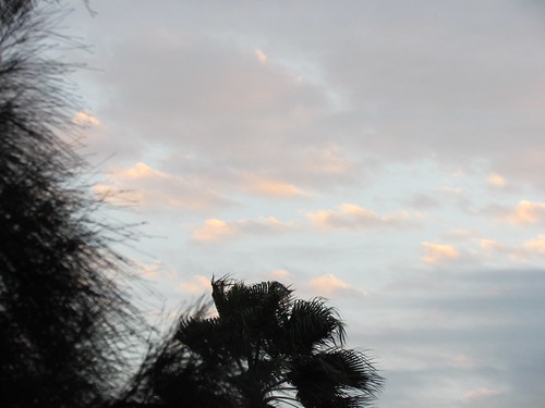 pink blue sunset storm tree floral beautiful beauty sunshine clouds sunrise landscapes heaven peace peaceful palmtree heavens puffy heavenly stormclouds soothing horizons