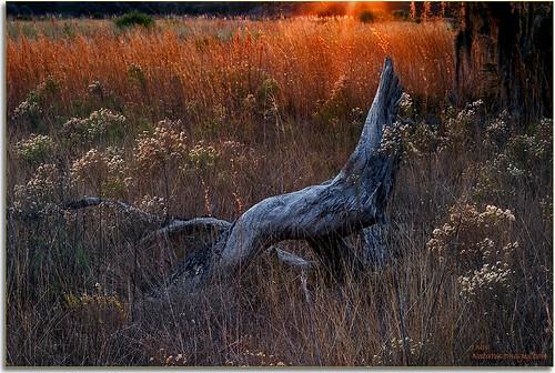 landscapes parks sunsets stateparks 2470mm oldflorida floridaimages detailstudies lakekissimmee floridastateparks