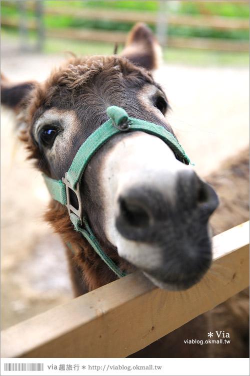 【彰化景點】克林姆莊園Cream Manor~小型動物園!戶外親子同遊好去處25