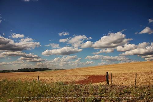 azul brasil clouds country scene céu nuvens terra riograndedosul campos trigo agricultura tigo terravermelha pampasgaúchos gettyholidays2010