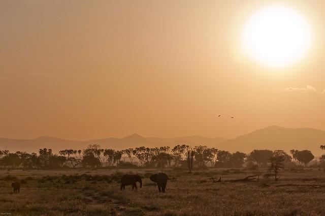 Einer von vielen Gründen nach Kenya zu reisen