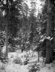 Man in winter woods, Stockholm, Sweden