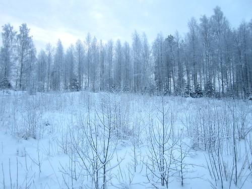 christmas schnee winter snow suomi finland landscape snowy sneeuw lumi talvi snö maisema joulu sulkava