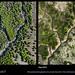 Salt Pond A21 progression by KAP Cris