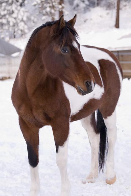 Couverture or not couverture ? C'est le cheval qui décide !
