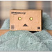 Danbo - After the bath