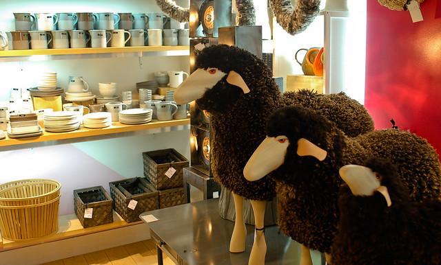 black sheep flickr photo sharing. Black Bedroom Furniture Sets. Home Design Ideas