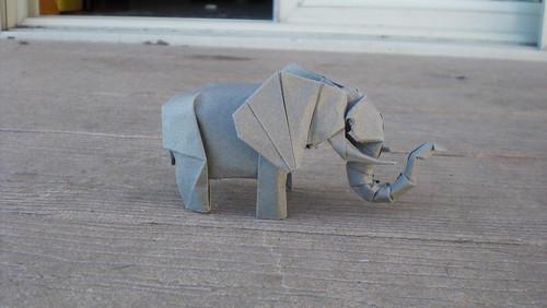 Elephant-Trollip