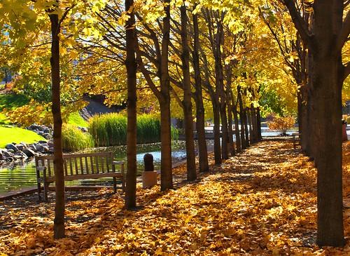 park autumn usa reflection fall leaves minnesota america reflections rustic edina centenial