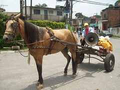 mare, vehicle, horse tack, coachman, horse, horse harness, carriage, cart,