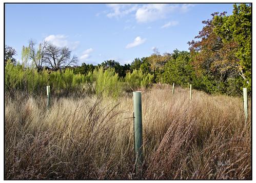 austin treefarm southpocket ragnaranch swanksalot sethanderson landofmanynames yurtistan 18mm105mm loweryurtistan