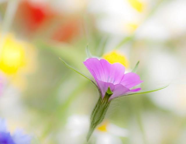 June's wild flowers