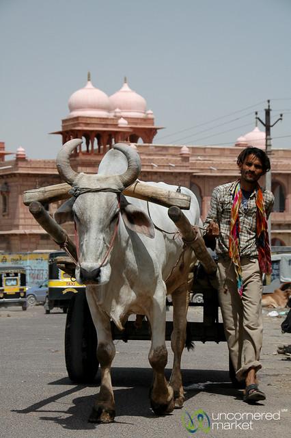 Ox Cart in Bikaner - India