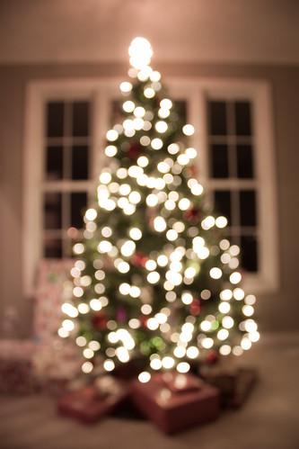 Bokeh Tree_