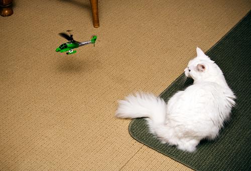 kitten toys