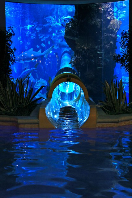 Creme de la creme. Water slide at the Golden Nugget. Goes through the freakin' shark tank.