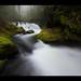 Eden - Columbia River Gorge, Washington by Jamey Pyles