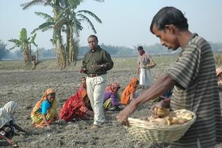 Women farmers of Rangpur sow potato seeds while Shykh tells their story