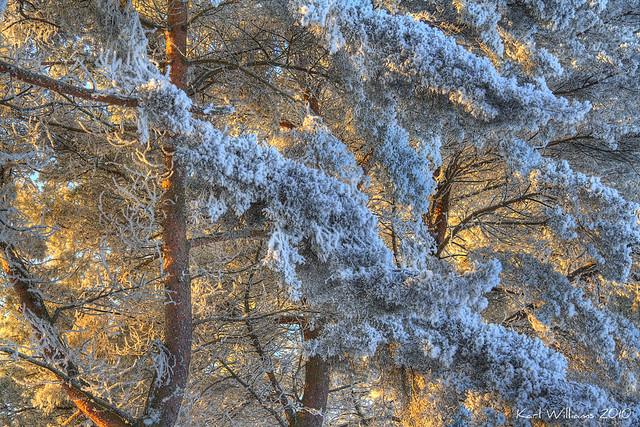 Winter Colours (2)