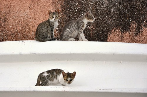 Wild Cats of Benitses >^..^<