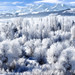 Frosted Trees in Ogden Valley Utah by Utah Images - Douglas Pulsipher